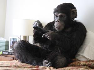 Primate Cinema