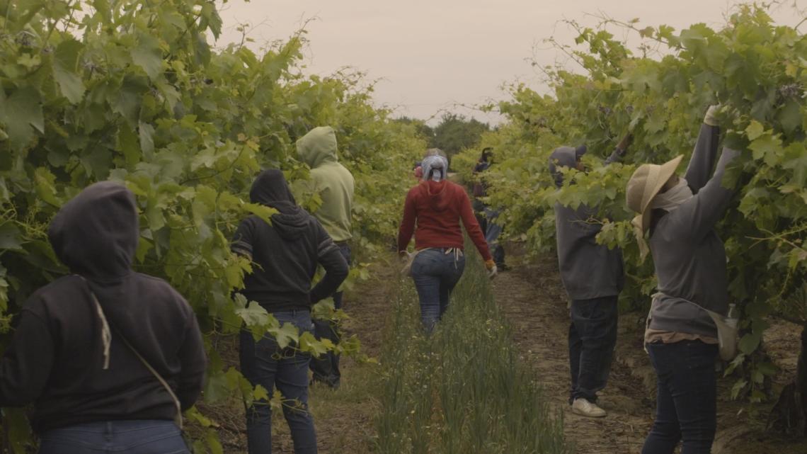 (1) Workers in Grape Field